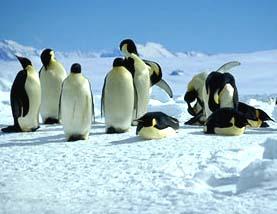 PenguinsMTS