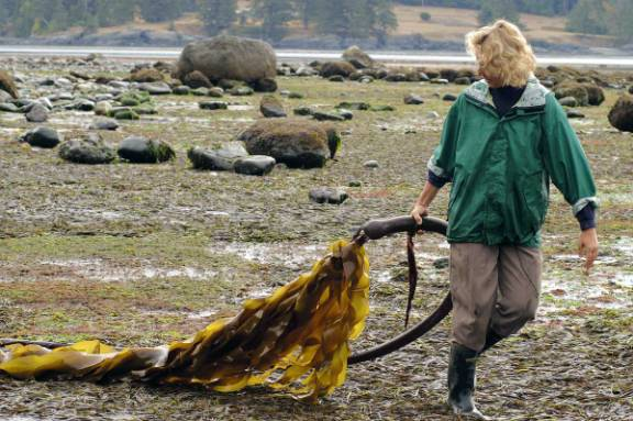 Seaweed lady transcript of interview 3 14 05 sooke harbour house