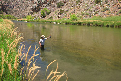 Black canyon of the gunnison river for Gunnison river fishing