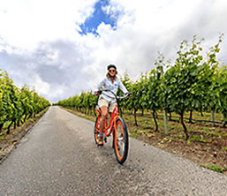 Cycling through Okanagan vineyard