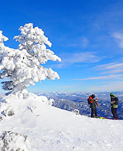 Bogus Basin lone tree and skiers